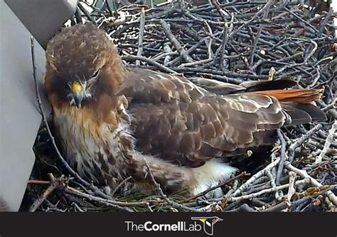 1000 images about all about bird cams on pinterest