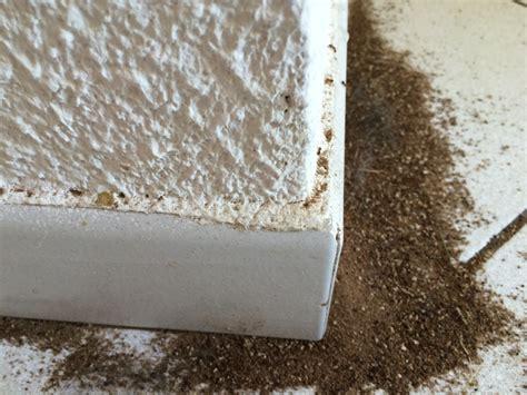 fourmis dans la maison de fourmis maison avie home
