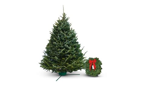 fresh cut christmas trees delivered photo albums