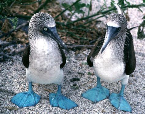 galapagos islands animals picturesofgalapagosanimals galapagos island