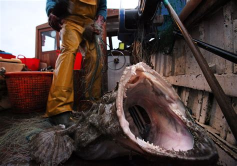 the biggest boat in the whole wide world 15 terrifying things in the ocean because jaws has