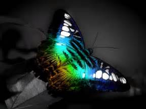 colorful butterfly wallpaper funny wallpaper