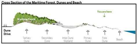 sand dune cross section avalon dune and beach trail 2015 april
