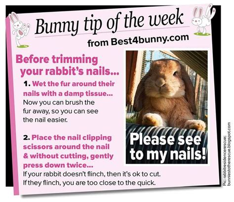 Must For The Week The House Bunny by Best 25 Lionhead Rabbit Ideas On