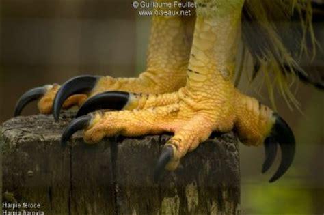 serre oiseau les serres les rapaces du monde