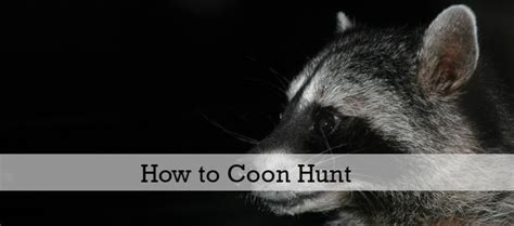 how to a coon to hunt how to coon hunt the anatomy of a hunt coon club