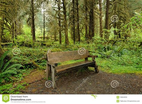 bench in forest bench in rain forest stock photos image 18904933