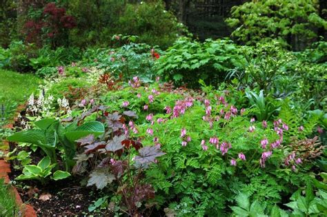 shade flower border garden landscaping ideas pinterest