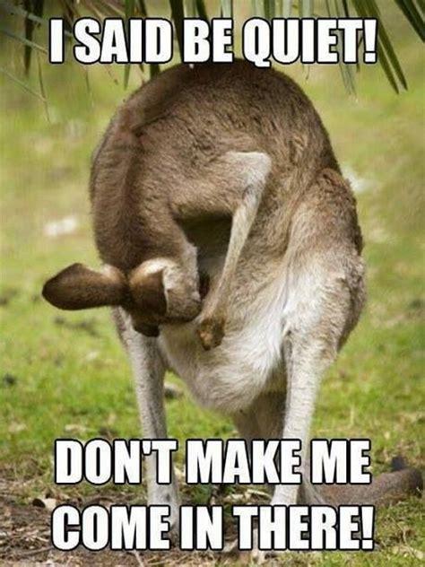 Kangaroo Meme - kangaroo memes pinterest kangaroos and memes