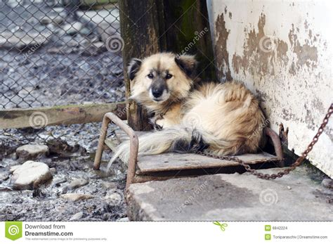 house guard dog best house guard dogs house guard dogs 28 images home protection dogs up your home s security