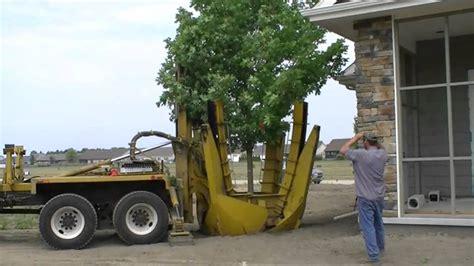 Tree Spandek big tree spade
