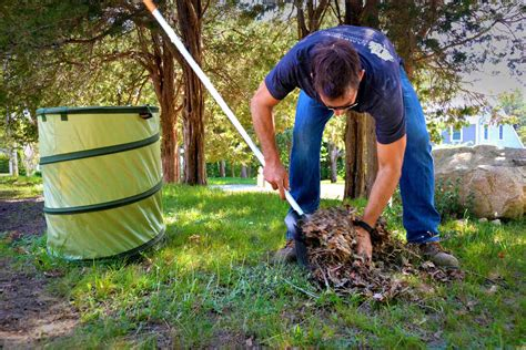 backyard clean up how to care for a lawn hirerush blog
