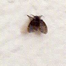 small bathroom flies bathroom fly what s that bug