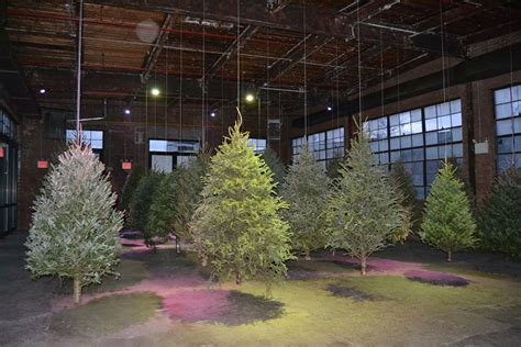 260515 in the forest hangs a photos artist hangs suspended forest at maspeth s