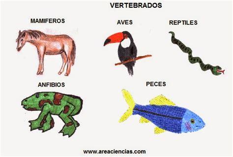 los animales vertebrados los animales los animales vertebrados