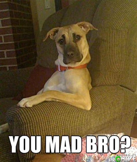Mad Dog Meme - you mad bro dog you mad bro quickmeme
