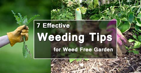 Container Gardening Guide - 7 effective weeding tips for a weed free garden balcony garden web