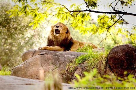 Boneka Bantal Running Serengeti Animal Kingdom kilimanjaro safaris review