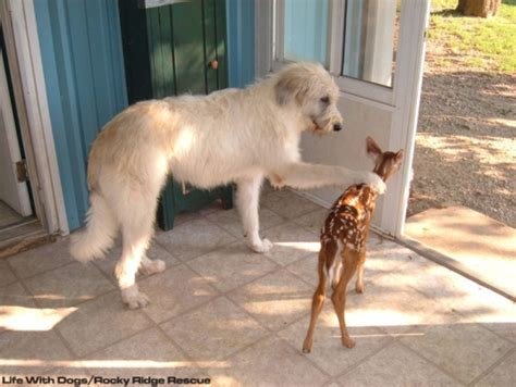 deer dogs rescue of the month rocky ridge refuge