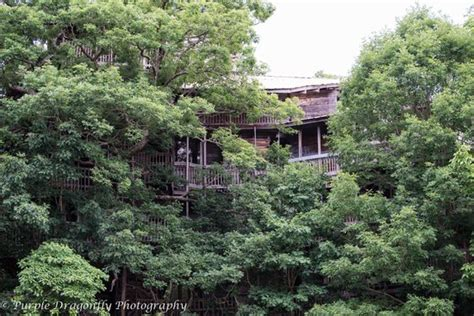 a house among the trees treehouse picture of the minister s tree house
