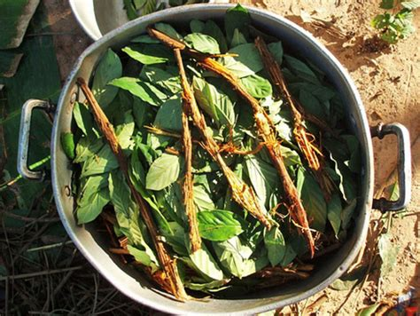 Detox Ayahuasca by The World Is Rediscovering The Benefits Of