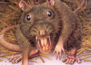 imagenes ratas asquerosas 9 curiosidades sobre ratas taringa