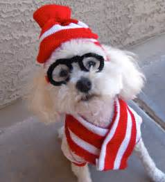 Dog costume where s waldo woof pet halloween hat by cagedheat3
