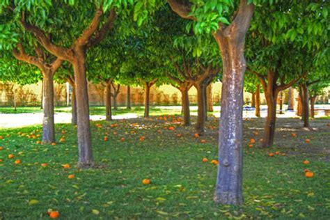 parco savello giardino degli aranci il giardino degli aranci of rome civitavecchia