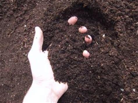 garden soil ready  planting