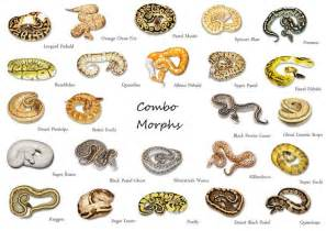 colors in python python color morphs reptile stuff