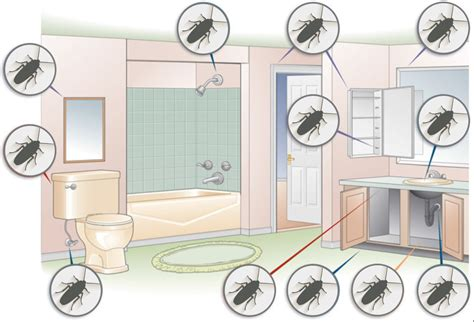 Where Do Mosquitoes Hide In Your Room | cockroach inspection where do roaches hide
