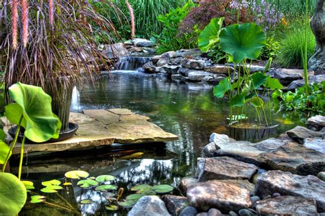 natural backyard pond pond designs natural swimming ponds