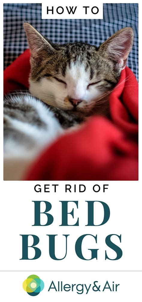bed bugs how to get rid of them bed bug how to get rid of them bed bugs how to get rid of