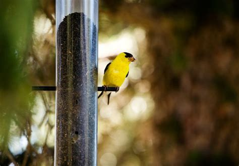 how to attract birds bob vila
