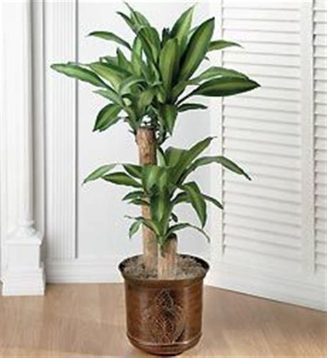 indoor tropical plants low light the world s catalog of ideas