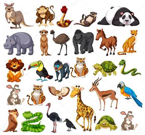 imagenes animales varios diferentes tipos de animales salvajes en blanco archivo