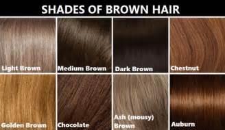 shades of brown hair color chart shades of brown hair colors chart brown hairs