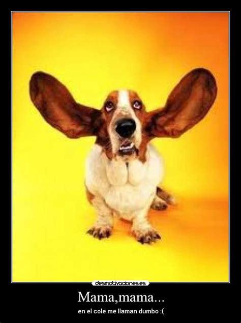 imagenes de orejones chistosos im 225 genes y carteles de orejones desmotivaciones