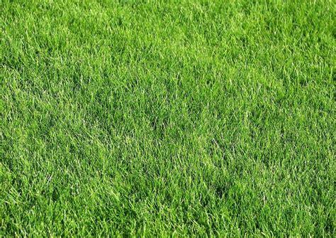 Unkraut Im Rasen Bekämpfen by Rasen Entfernen Moos Im Rasen Dauerhaft Entfernen