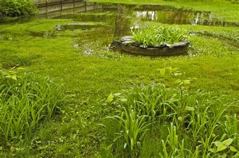 backyard flooding problems learn about backyard drainage why your lawn floods and