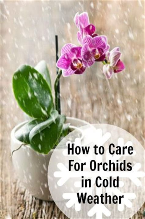 how to care for orchids in cold weather garden ideas inspiration pinterest