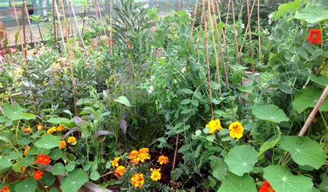 How Does Your Garden Grow by How Does Your Garden Grow Featured June Winner