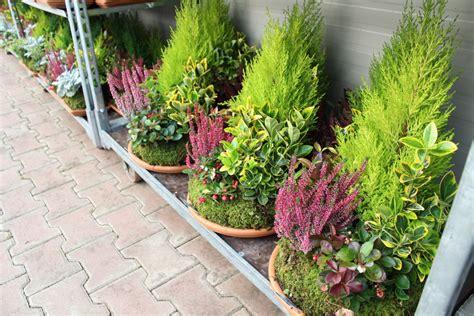 piante verdi da terrazzo emejing piante verdi da terrazzo photos design trends