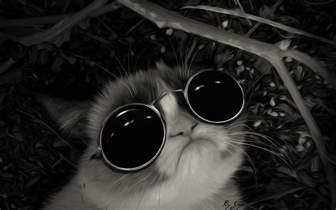 wallpaper cat with sunglasses lunettes de soleil john lennon poster g 233 niale grincheux