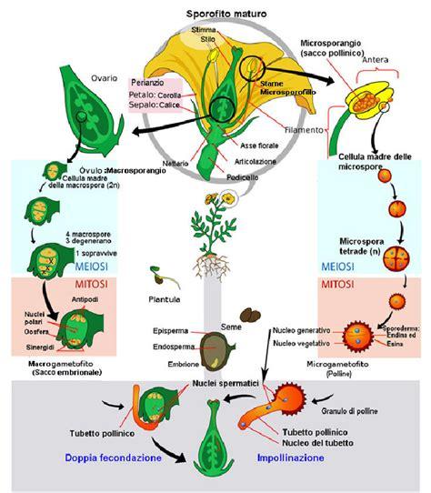 la riproduzione dei fiori acta plantarum home page