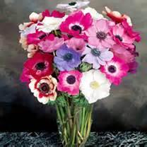 Selimut Monalisa Flower 1 all flower seeds flower seeds flowers garden dobies