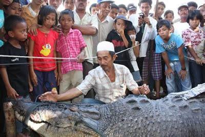 Mesin Giling Ikan Asin ikan hias foto ikan kepala buaya