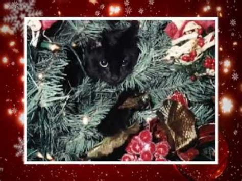 merry christmas funny cats style  holiday cheer ecards