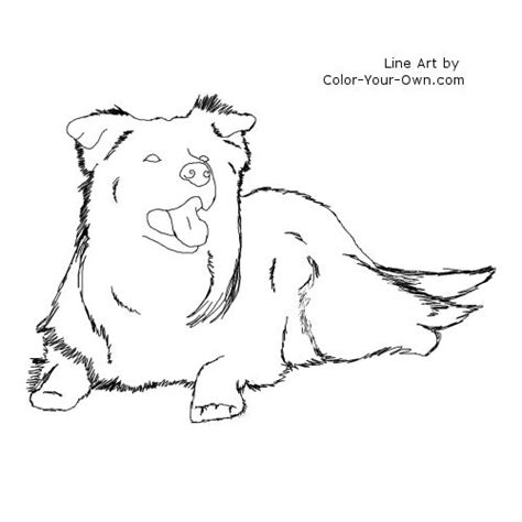 coloring pages of collie dogs border collie laying coloring page