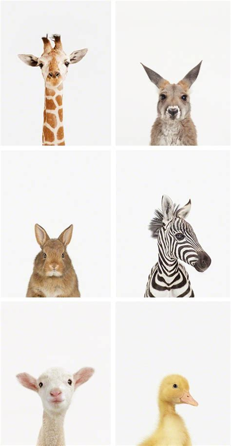 printable animal pictures for nursery the animal print shop mr printables blog